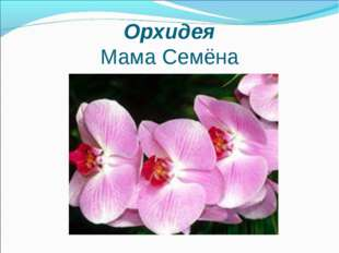 Орхидея Мама Семёна