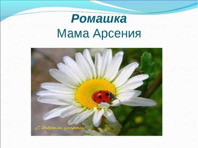 Ромашка Мама Арсения