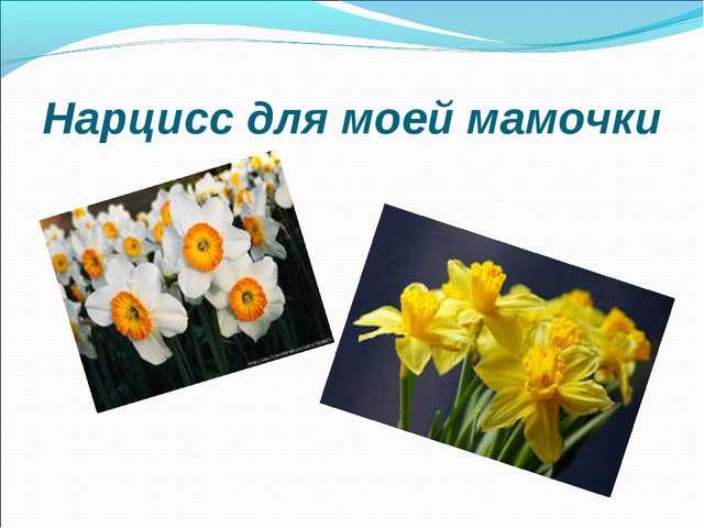 Нарцисс для моей мамочки
