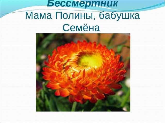 Бессмертник Мама Полины, бабушка Семёна
