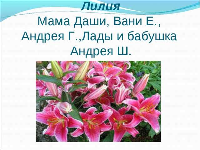 Лилия Мама Даши, Вани Е., Андрея Г.,Лады и бабушка Андрея Ш.