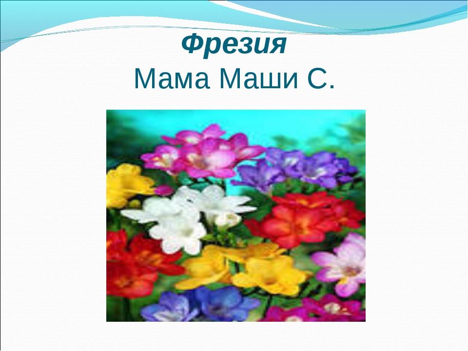 Фрезия Мама Маши С.