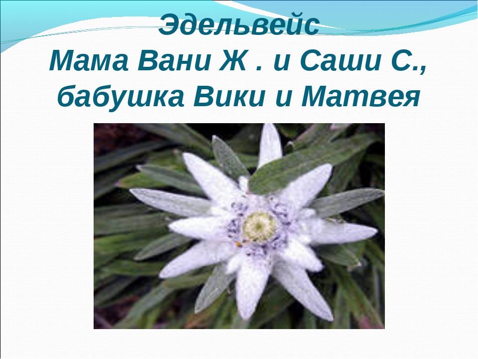 Эдельвейс Мама Вани Ж . и Саши С., бабушка Вики и Матвея
