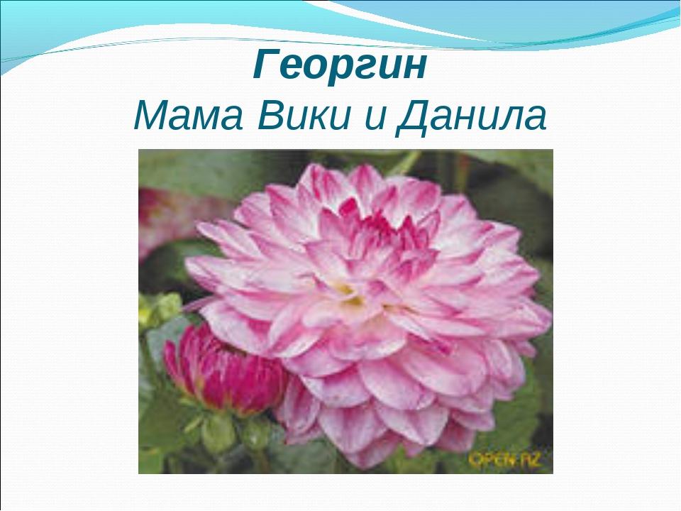 Георгин Мама Вики и Данила