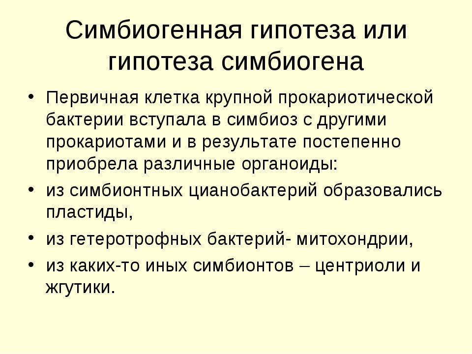 Симбиогенная гипотеза или гипотеза симбиогена Первичная клетка крупной прокар...