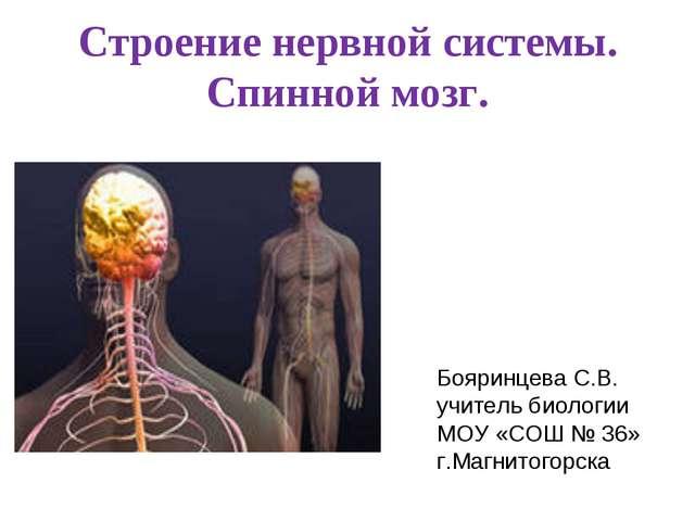 Строение нервной системы. Спинной мозг. Бояринцева С.В. учитель биологии МОУ...