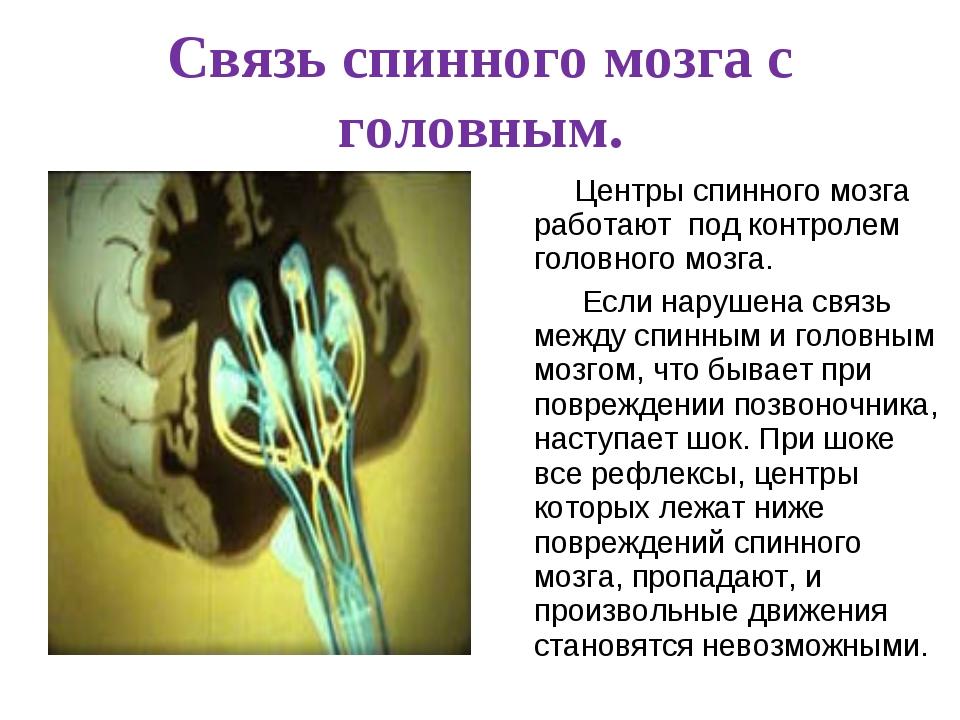 Связь спинного мозга с головным. Центры спинного мозга работают под контроле...