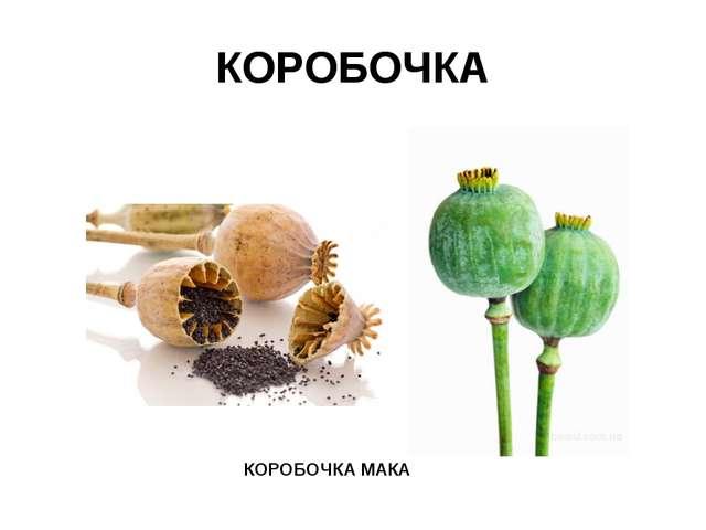 КОРОБОЧКА КОРОБОЧКА МАКА