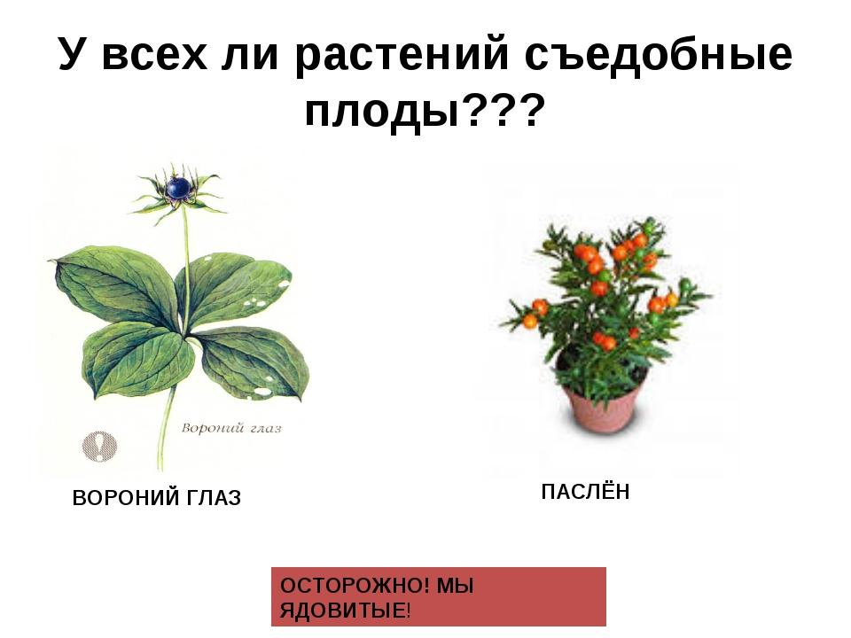 У всех ли растений съедобные плоды??? ПАСЛЁН ОСТОРОЖНО! МЫ ЯДОВИТЫЕ! ВОРОНИЙ...
