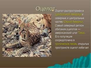 Оцелот Оцелот распространён в Центральной Америке и северных и центральных ч