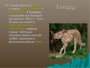 Гепард Гепарды обитают в Африке, а также в Индии, Передней и Средней Азии. В