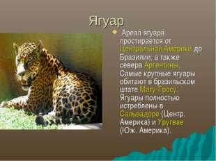 Ягуар Ареал ягуара простирается от Центральной Америки до Бразилии, а также с