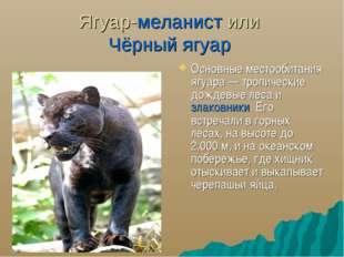 Ягуар-меланист или Чёрный ягуар Основные местообитания ягуара— тропические д
