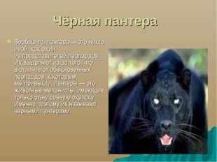 Чёрная пантера Вообще-то, пантера— это никто иной, как один изпредставител