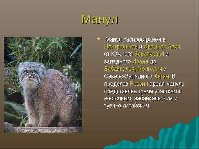 Манул Манул распространён в Центральной и Средней Азии, от Южного Закавказья...