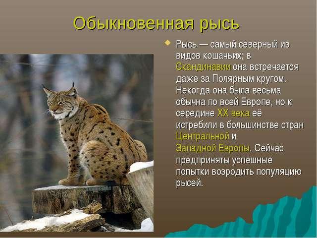 Обыкновенная рысь Рысь— самый северный из видов кошачьих; в Скандинавии она...