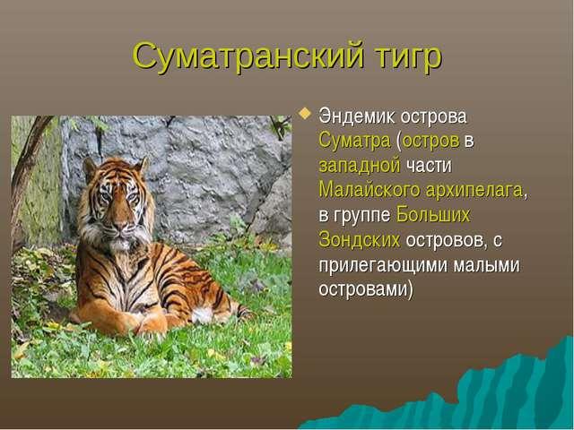 Суматранский тигр Эндемик острова Суматра (остров в западной части Малайского...
