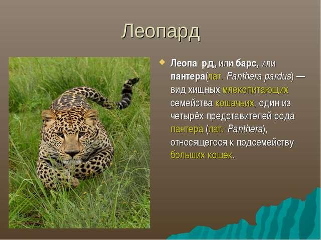 Леопард Леопа́рд, или барс, или пантера(лат.Panthera pardus)— вид хищных м...