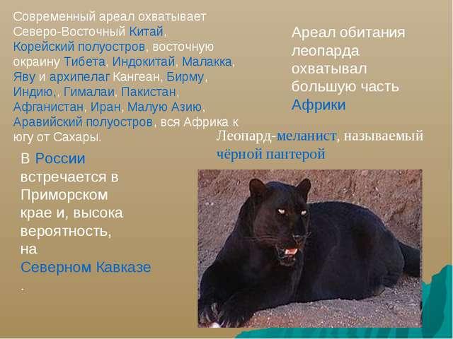 Ареал обитания леопарда охватывал большую часть Африки В России встречается в...