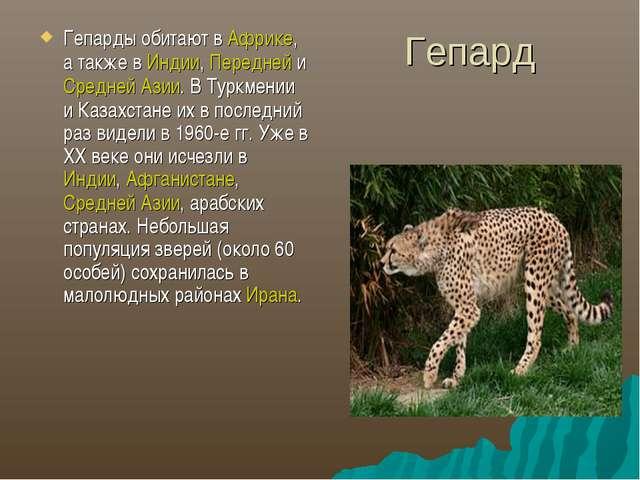 Гепард Гепарды обитают в Африке, а также в Индии, Передней и Средней Азии. В...