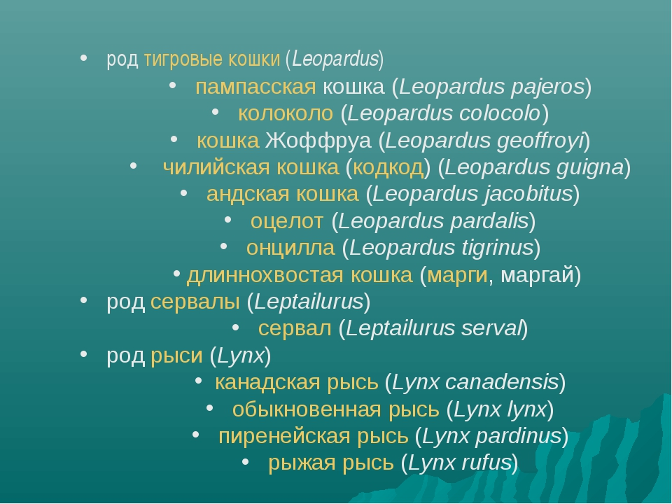 род тигровые кошки (Leopardus) пампасская кошка (Leopardus pajeros) колоколо...