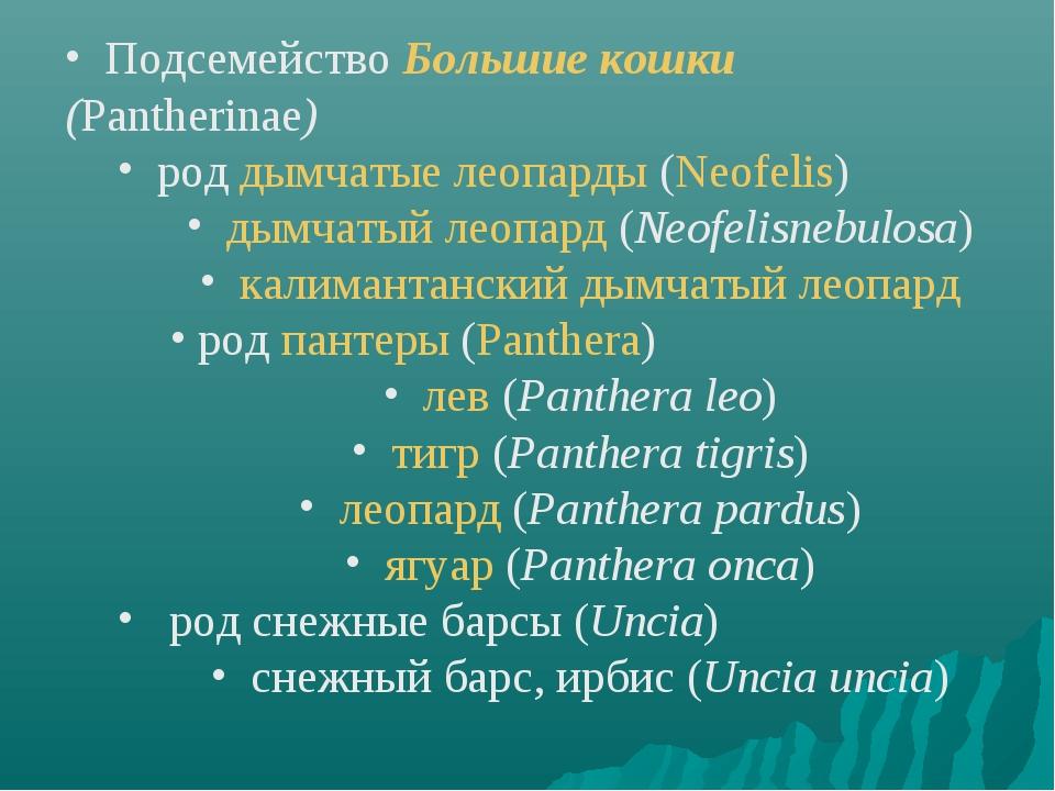 Подсемейство Большие кошки (Pantherinae) род дымчатые леопарды (Neofelis) ды...