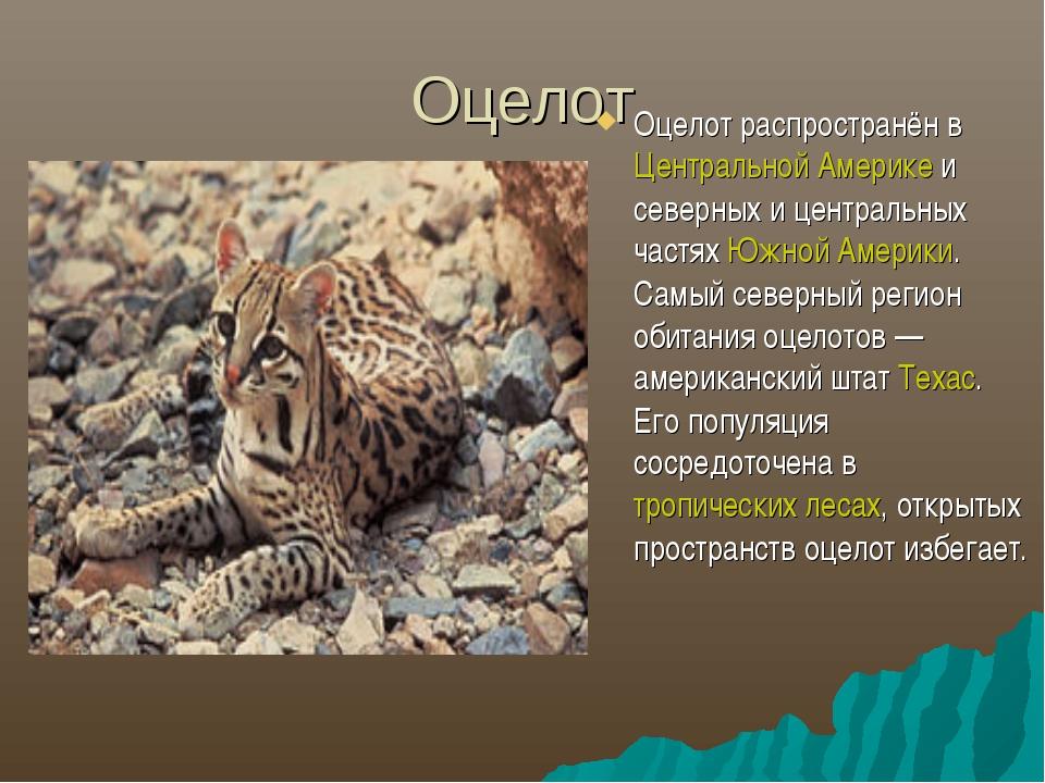 Оцелот Оцелот распространён в Центральной Америке и северных и центральных ч...