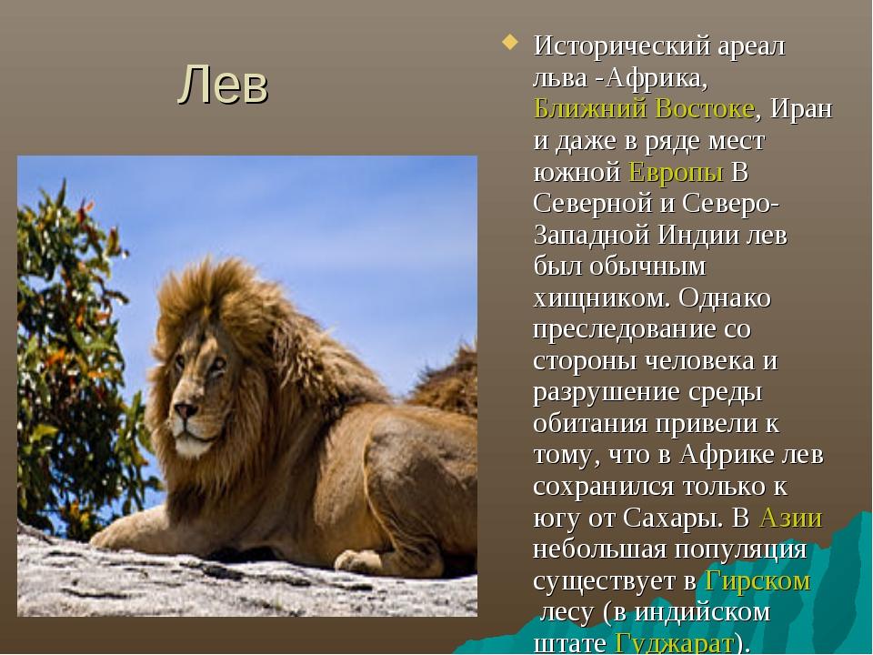 Лев Исторический ареал льва -Африка, Ближний Востоке, Иран и даже в ряде мест...