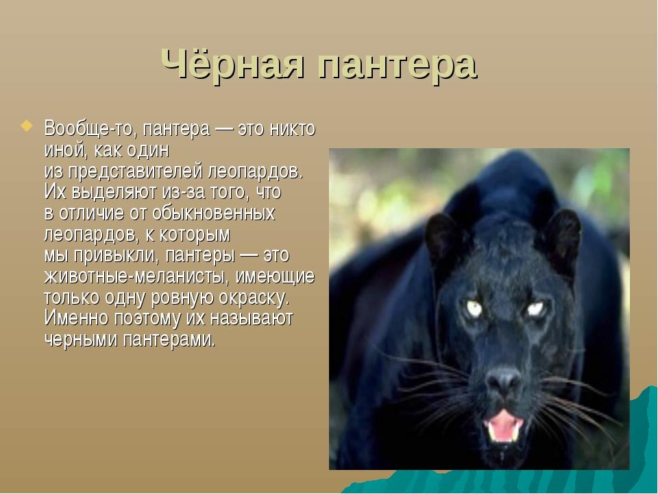 Чёрная пантера Вообще-то, пантера— это никто иной, как один изпредставител...