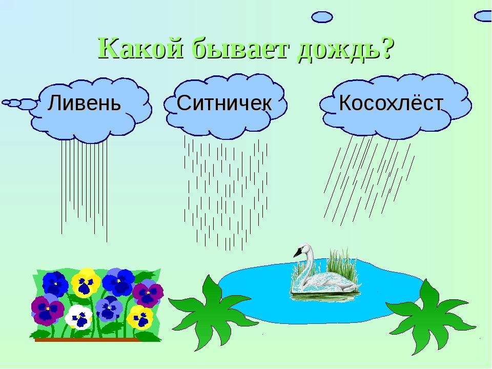 Какой бывает дождь? Ливень Ситничек Косохлёст