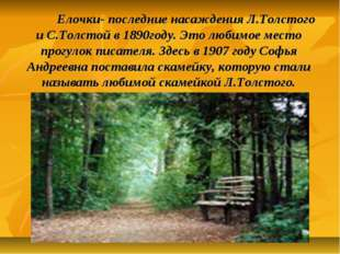 Елочки- последние насаждения Л.Толстого и С.Толстой в 1890году. Это любимое
