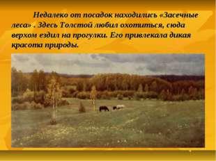 Недалеко от посадок находились «Засечные леса» . Здесь Толстой любил охотить
