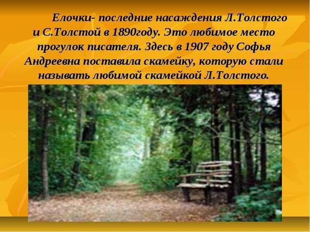 Елочки- последние насаждения Л.Толстого и С.Толстой в 1890году. Это любимое...