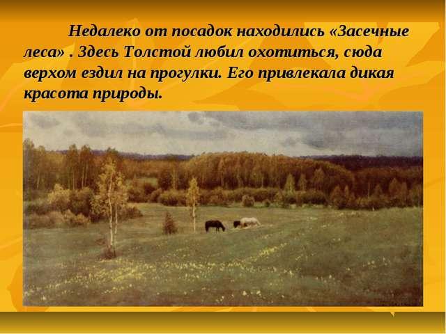 Недалеко от посадок находились «Засечные леса» . Здесь Толстой любил охотить...
