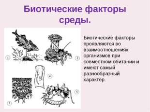 Биотические факторы среды. Биотические факторы проявляются во взаимоотношения