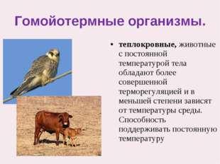 Гомойотермные организмы. теплокровные,животные с постоянной температурой тел
