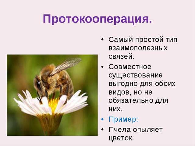 Протокооперация. Самый простой тип взаимополезных связей. Совместное существо...