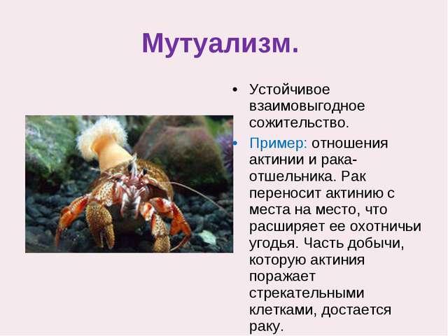 Мутуализм. Устойчивое взаимовыгодное сожительство. Пример: отношения актинии...