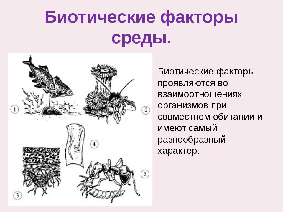 Биотические факторы среды. Биотические факторы проявляются во взаимоотношения...