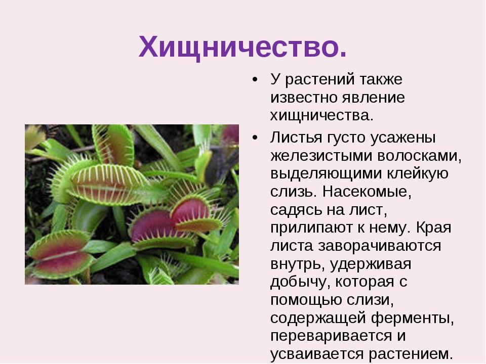 Хищничество. У растений также известно явление хищничества. Листья густо уса...