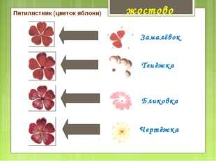 Пятилистник (цветок яблони) Замалёвок Тенёжка Чертёжка Бликовка жостово