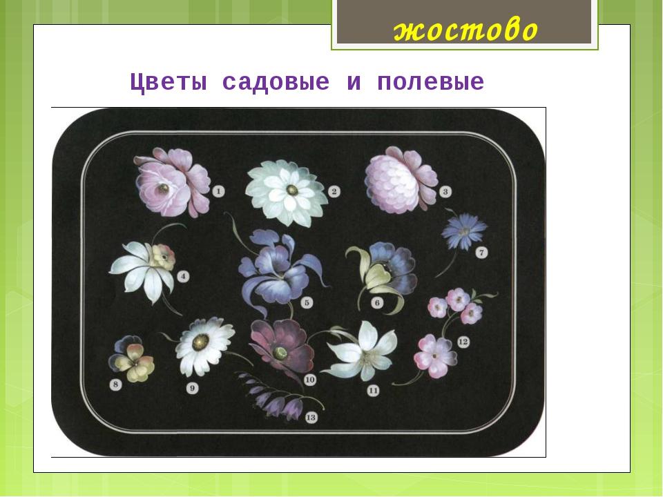 Цветы садовые и полевые жостово