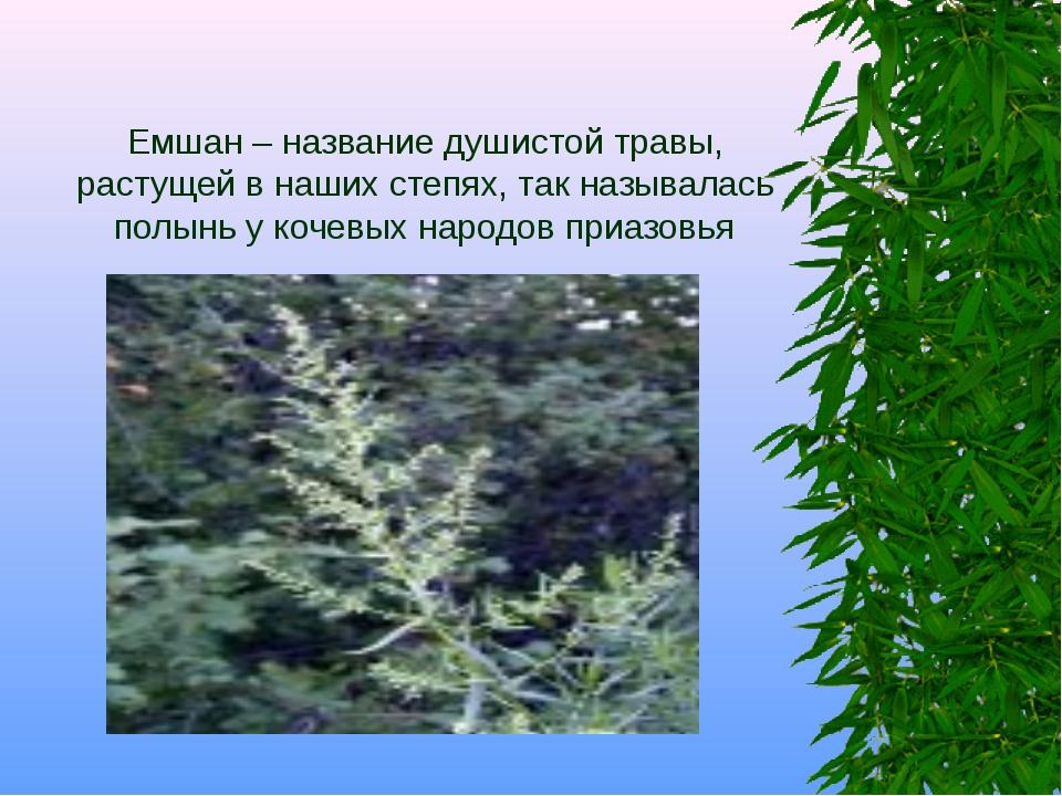 Емшан – название душистой травы, растущей в наших степях, так называлась полы...
