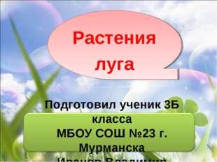 Подготовил ученик 3Б класса МБОУ СОШ №23 г. Мурманска Иванов Владимир Растени