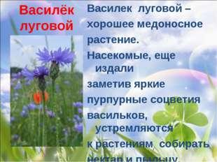 Василёк луговой Василек луговой – хорошее медоносное растение. Насекомые, ещ