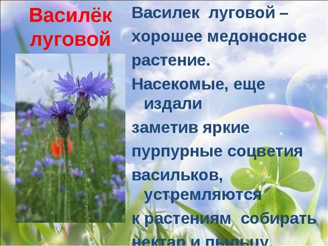 Василёк луговой Василек луговой – хорошее медоносное растение. Насекомые, ещ...