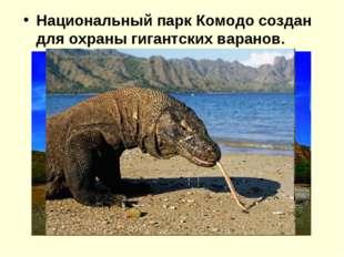 Национальный парк Комодо создан для охраны гигантских варанов.
