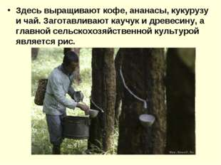 Здесь выращивают кофе, ананасы, кукурузу и чай. Заготавливают каучук и древес