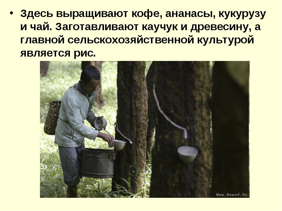 Здесь выращивают кофе, ананасы, кукурузу и чай. Заготавливают каучук и древес...