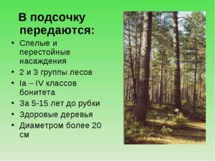 В подсочку передаются: Спелые и перестойные насаждения 2 и 3 группы лесов Iа